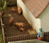 Hallertauer Bauernhof von Manfred.016.jpg